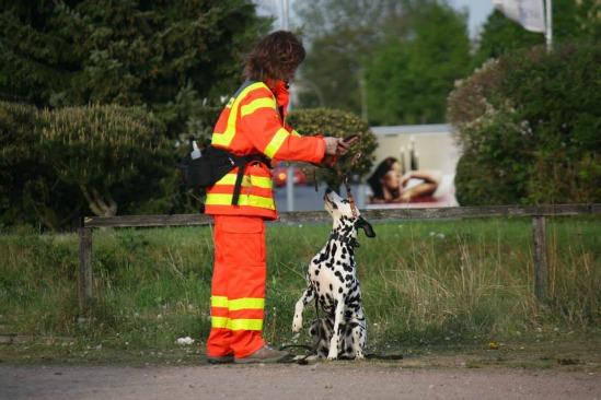 Rettungshunde-heute-historisches