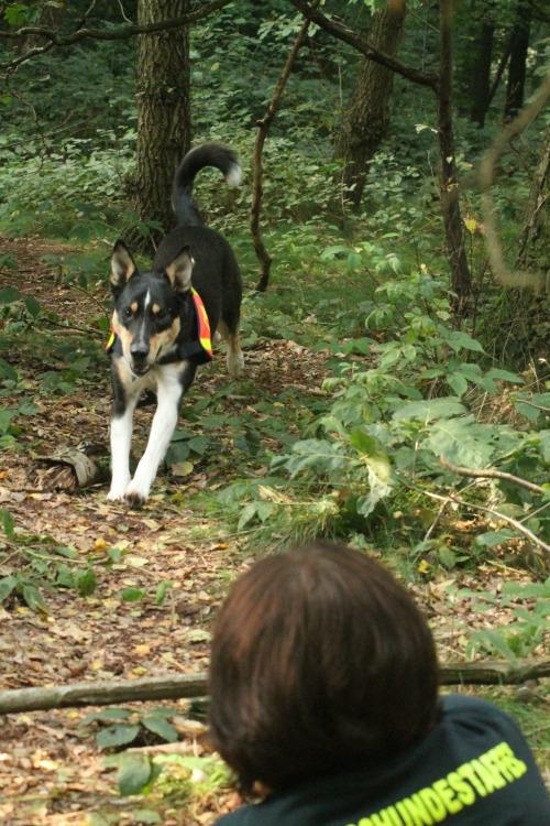 Ausbildungsinhalte-DRV-Rettungshund-Staffel