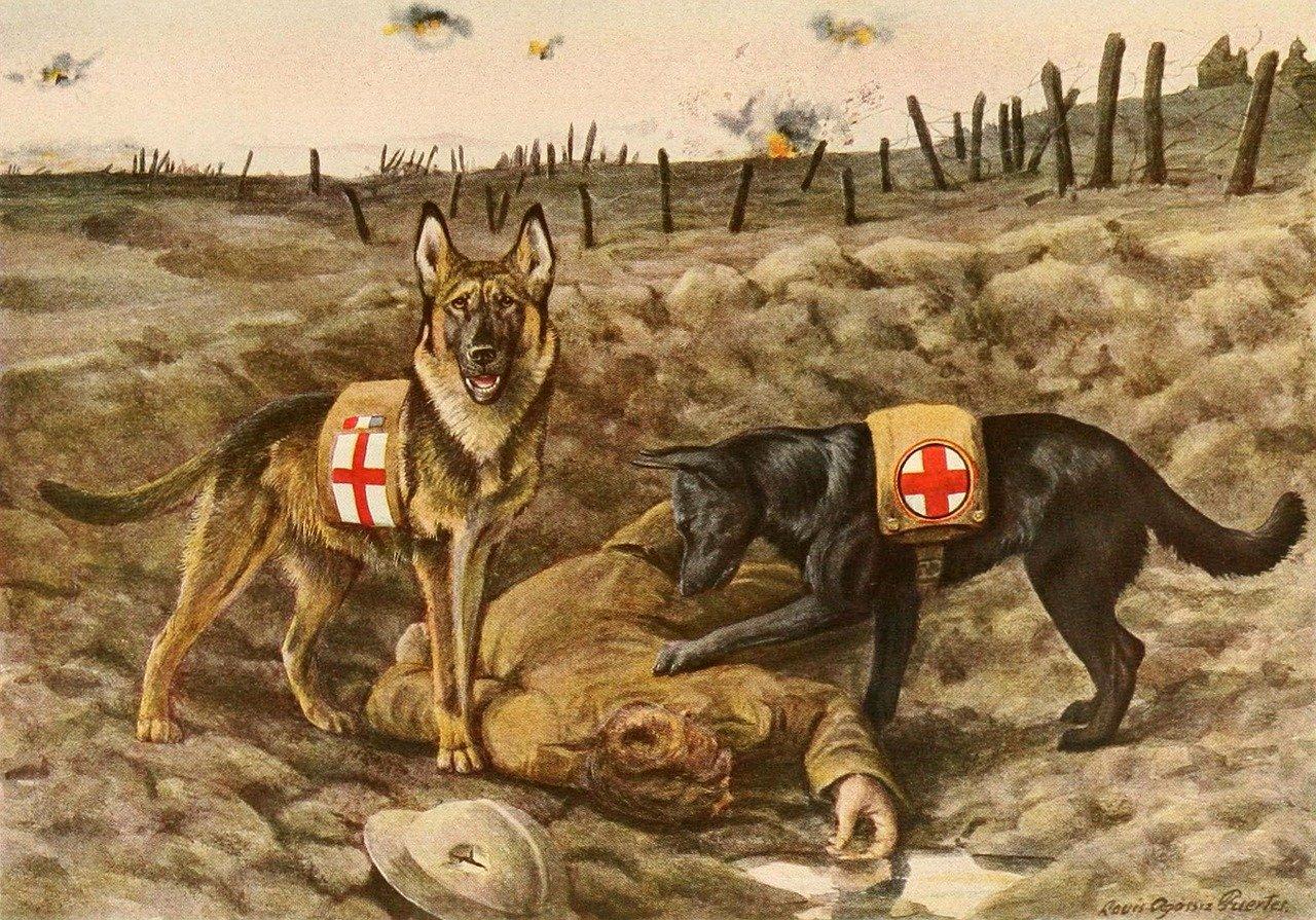 hunde-im-Krieg